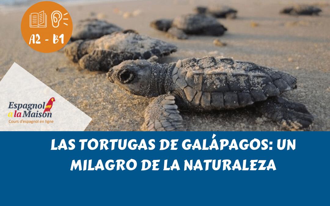 Tortugas en la isla Galápagos, Ecuador